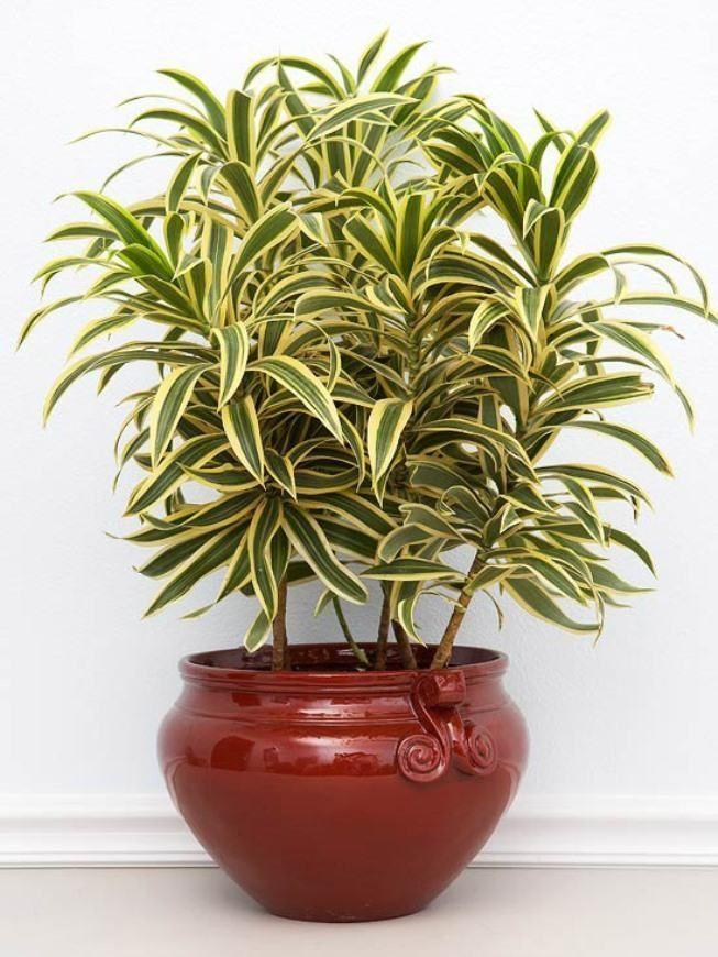 foto Easy growing best indoor houseplants for India