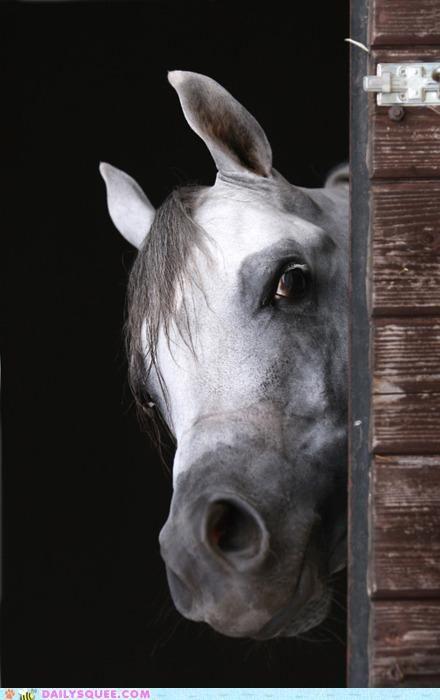 horse taking a peek