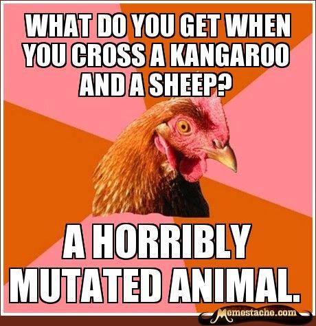 Anti joke chicken sally - photo#7