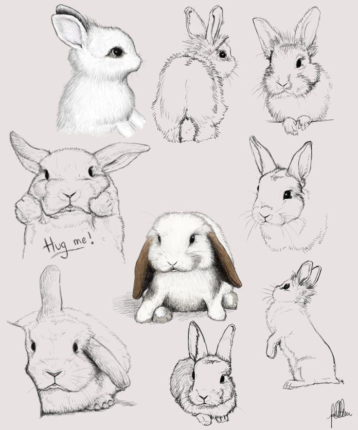 Rabbit head drawing