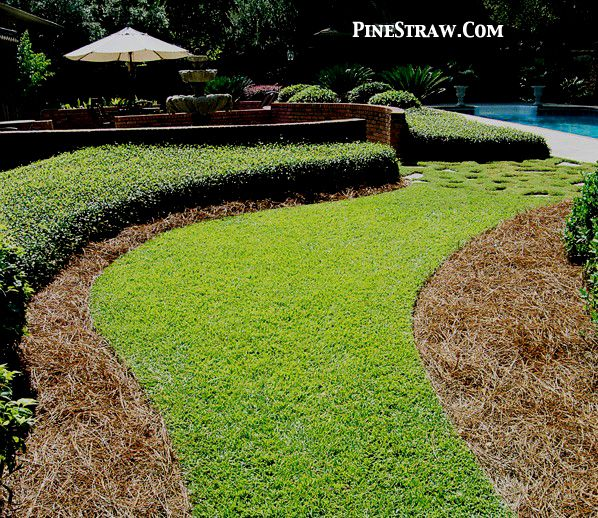 I Love Pine Straw Versus Mulch For Ground Cover