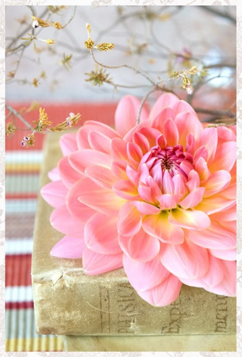 Beautifully large pink flower on book