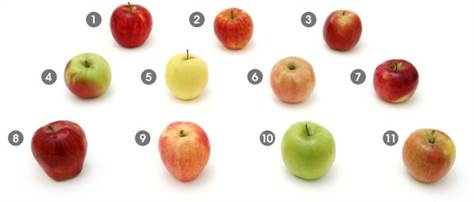 jonagold apple calories