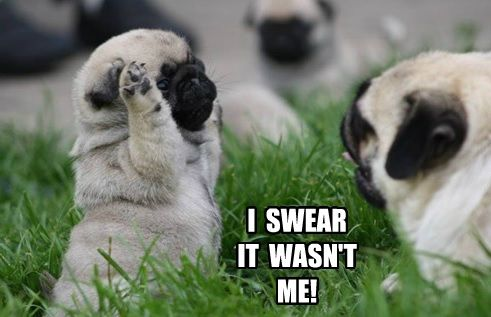 Put Your Paws Up Pug