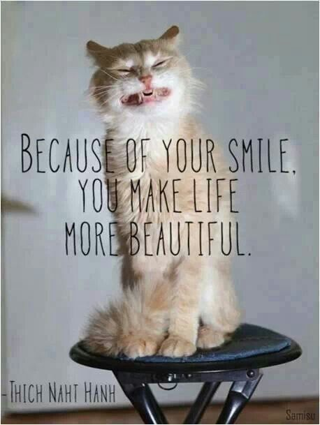 Funny Quotes About Cat Lovers : Smile :) #pets #cats #love #happy Pet Quotes and Sayings Pinterest