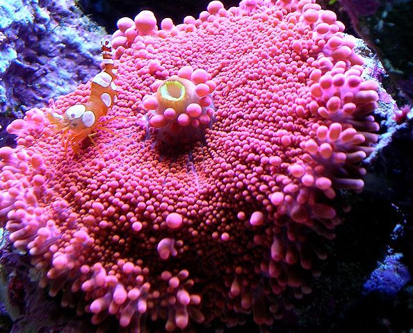 vibrant colored soft coral Sealife Pinterest