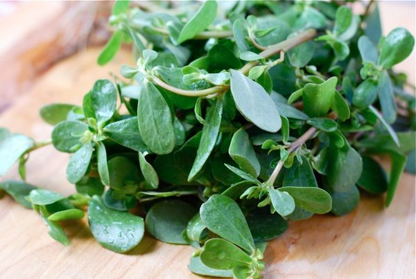 purslane - want to try