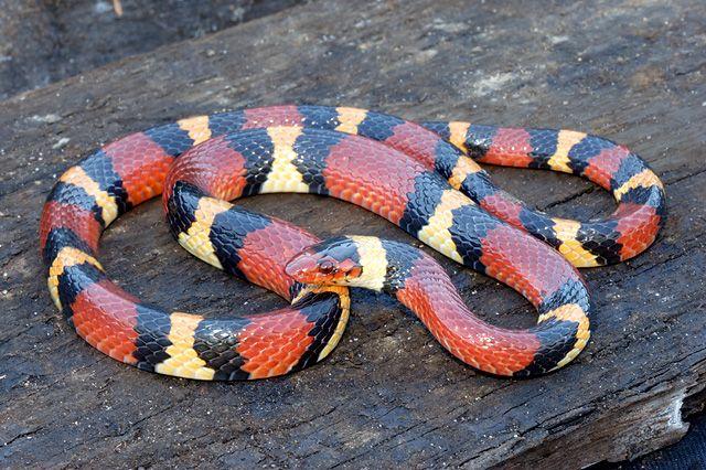 Snake Symbolism A message Spirit Animal Totems