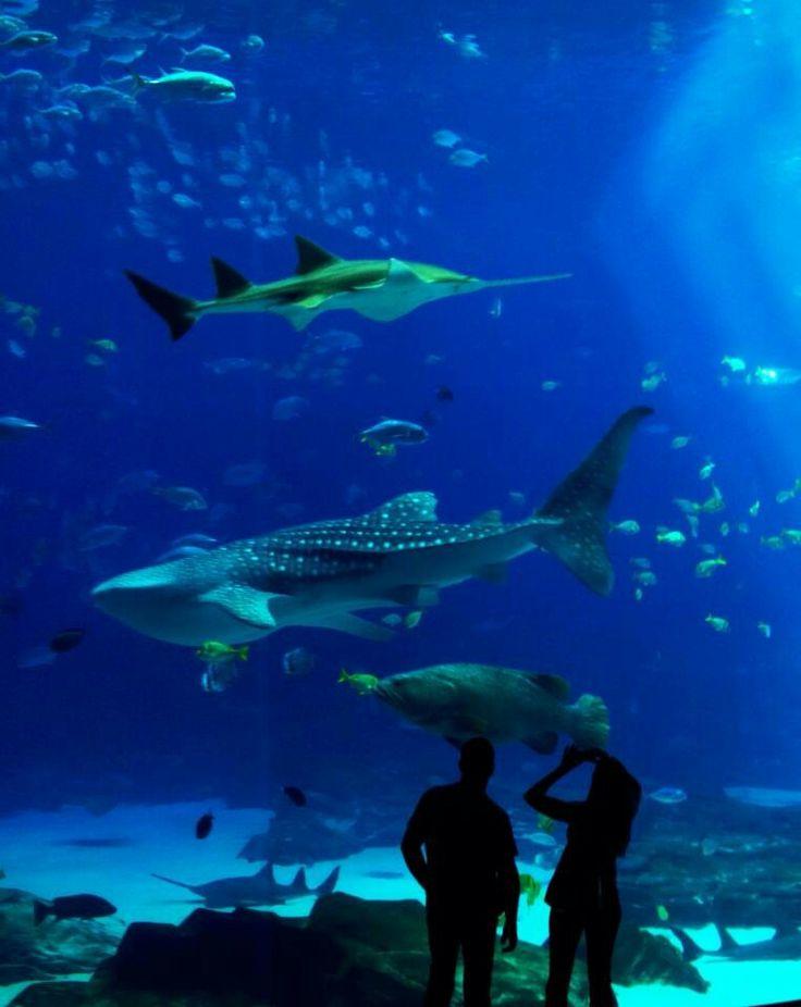 Georgia Aquarium Fish Bowls To Aquariums Pinterest
