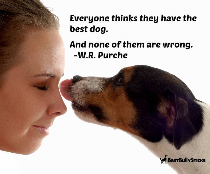 dog lovers quotes quotesgram