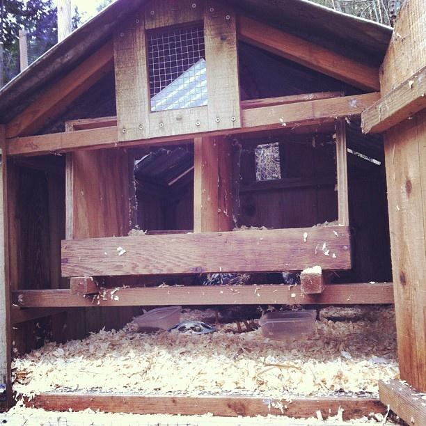 Chicken coop interior gardening pinterest for Chicken coop interior designs