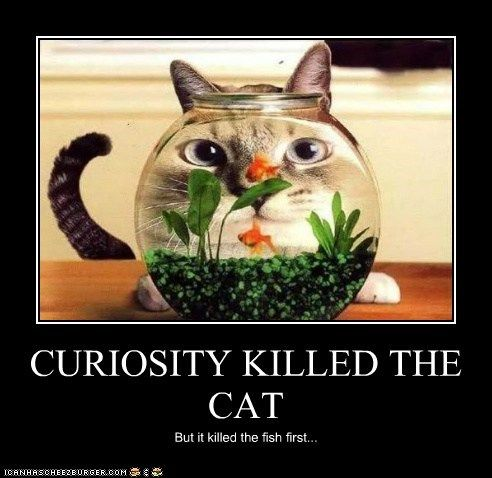 essays on curiosity killed the cat What does the phrase 'curiosity killed the cat' mean find out the phrase's definition & origin, and get examples of how to use it in a sentence.