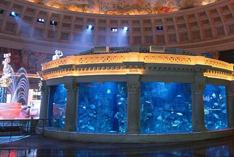 Fish aquarium las vegas aquarium at the silverton for Fish tank las vegas