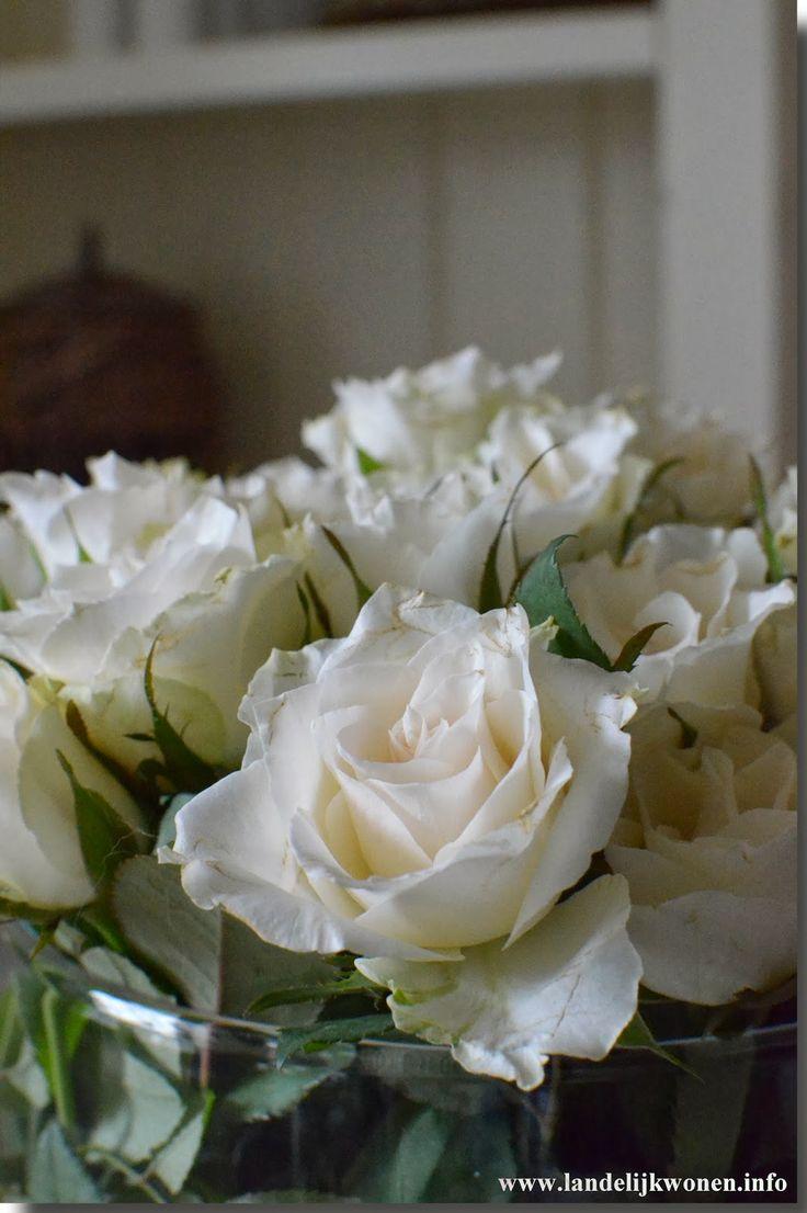 Landelijk Wonen Sweet... white roses  Roses and tulips  Pinterest