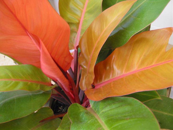 Pin by dra Di on Chartreuse Thumb: Shade Plants   Pinterest
