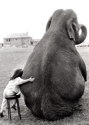 Best Friend Forever Level : Elephant