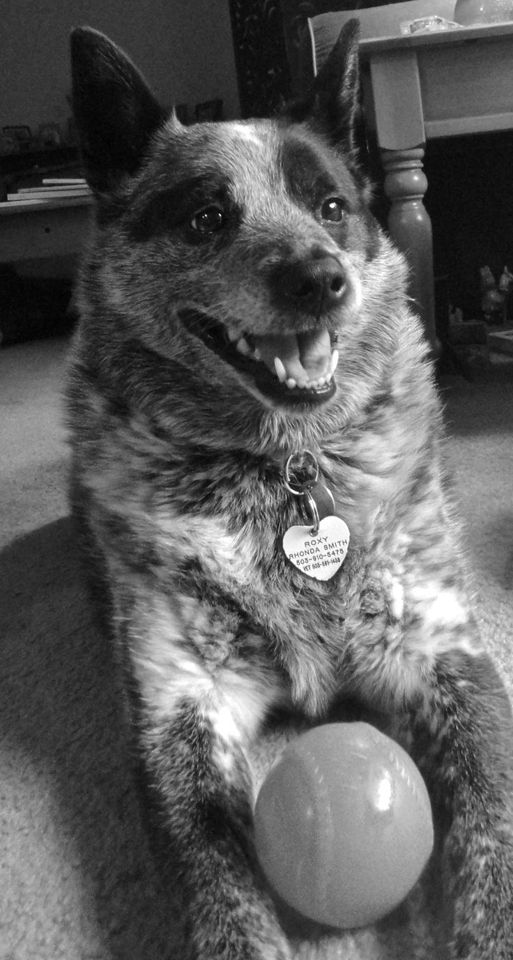 my baby Roxy!