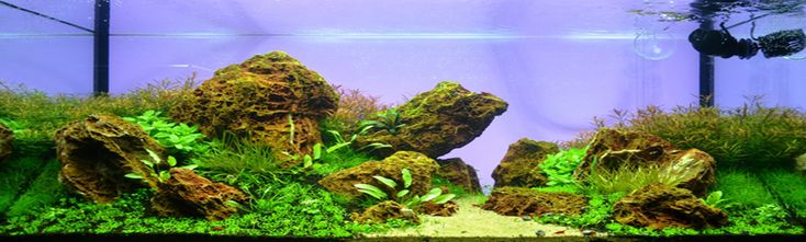 Professional tank (Aquascapingservice) Brand new, we would like to ...