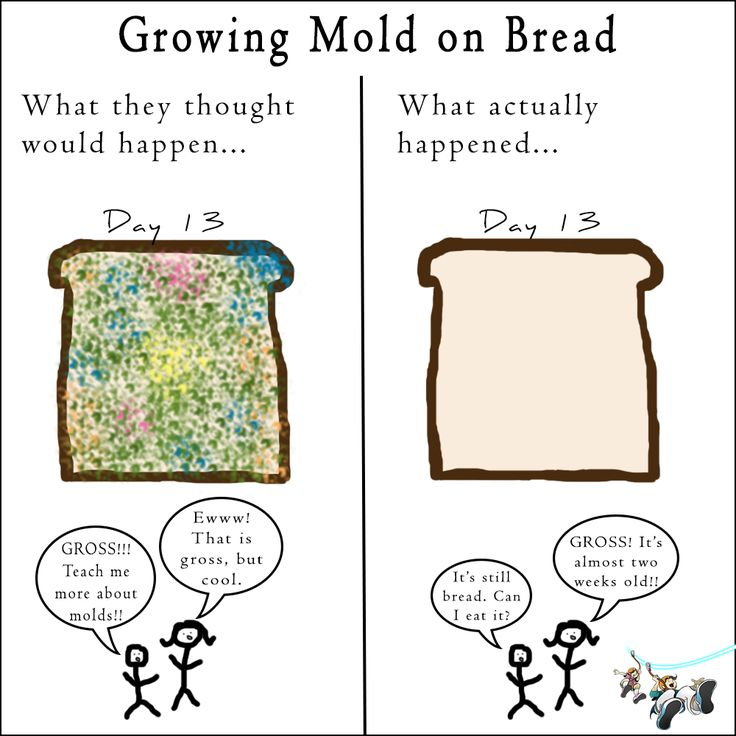 Bread Mold Experiment - Activity - Educationcom
