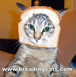 Cat Breading? I think YES!!!!!