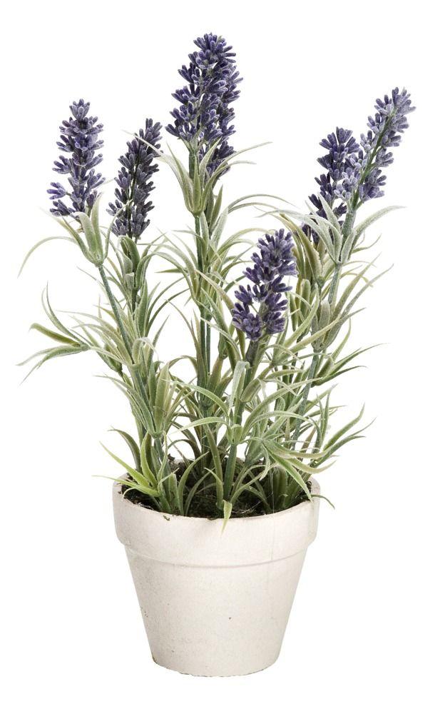 Woonideeen slaapkamer paars : Lavendel in pot altijd kleur op je ...