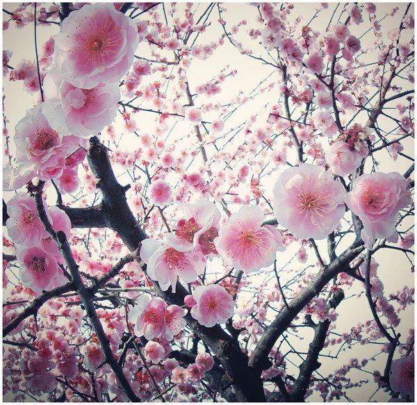 Japan  tears from heaven by jyoujo