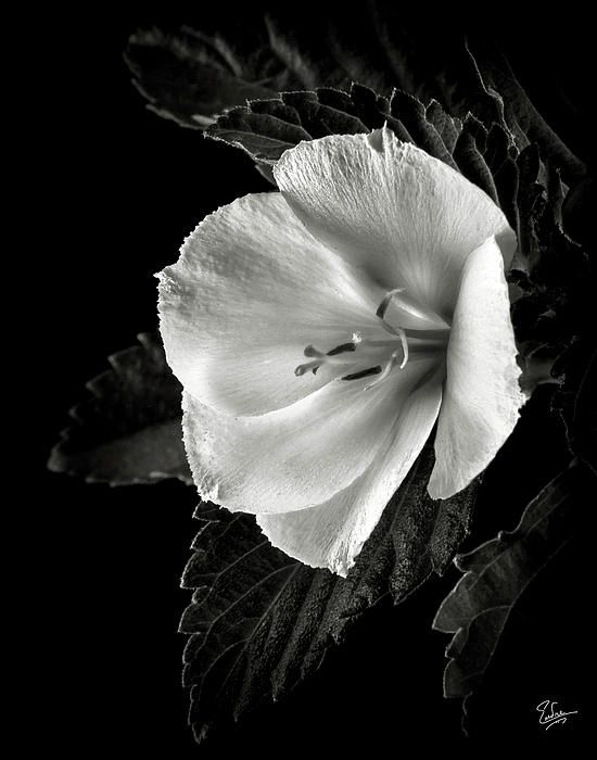 beautiful things | Black and White | Pinterest
