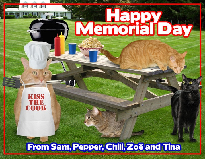 memorial day cat pics