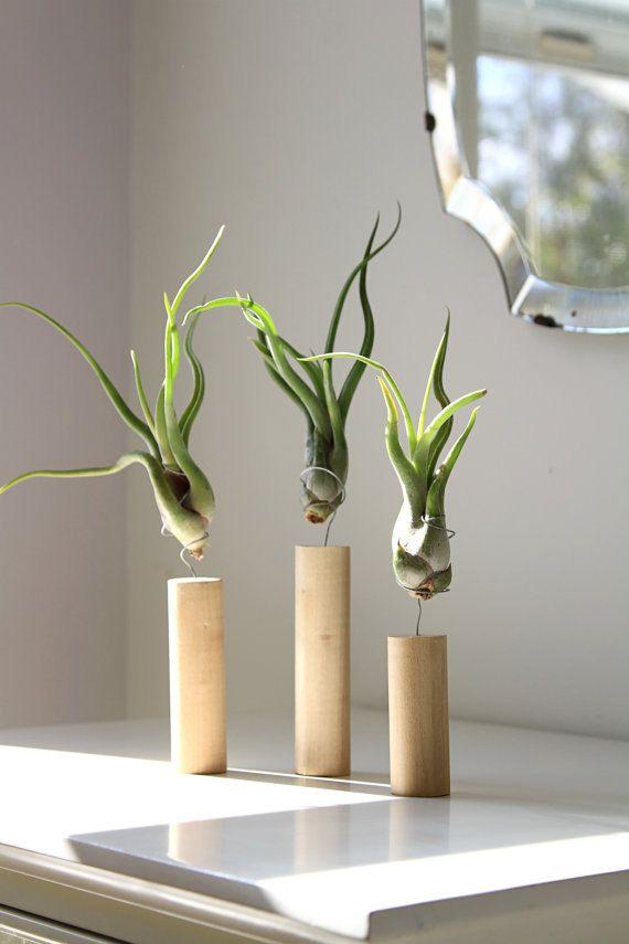 Unique air plant decor live air plants cork magnet house for Air plant decoration