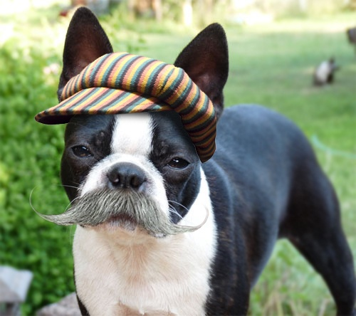 Because dogs should have mustaches...
