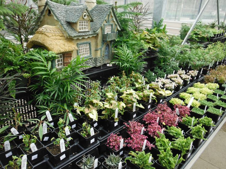 Pin by pamela tanyer on fairy or miniature garden ideas for Cheap garden plants