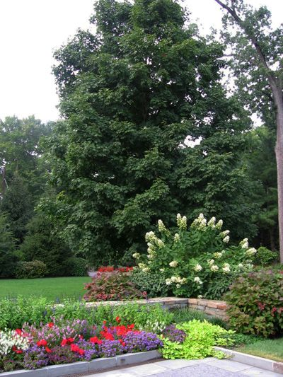 Landscaping Ideas Trees and Shrubs