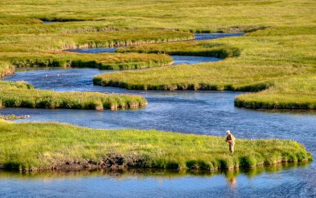 Yellowstone river fly fishing pinterest for Yellowstone lake fishing