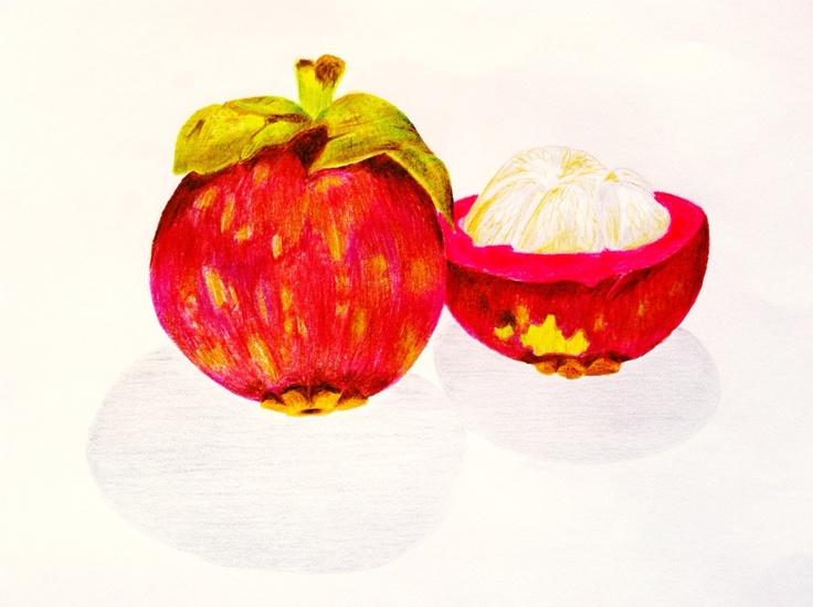 buah manggis | natural objects drawings | Pinterest