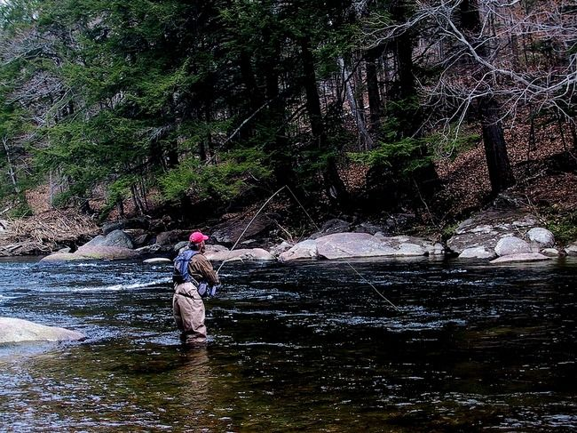 fly fishing in vermont by robert thiel