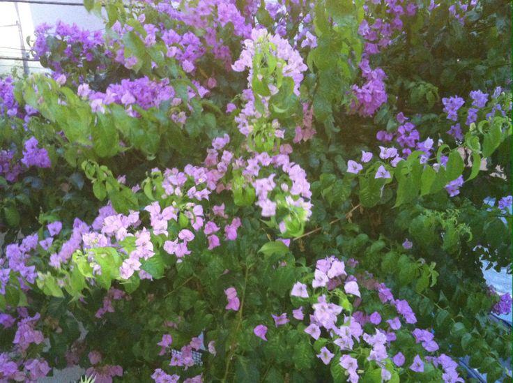 Flores Do Meu Jardim ~ Meu Jardim Rosas E Mimos