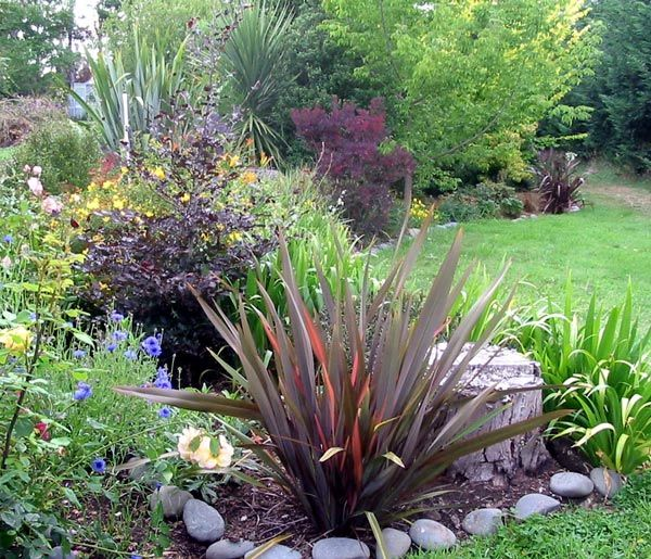 Color texture new zealand flax garden pinterest for New garden plants