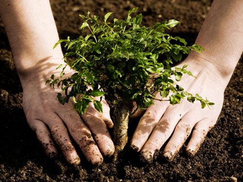 plant more trees Plant more trees by srijita das plant more trees as it looks green and save the homes of the animals please plant more trees as it looks green to keep the humans safe from pollution.