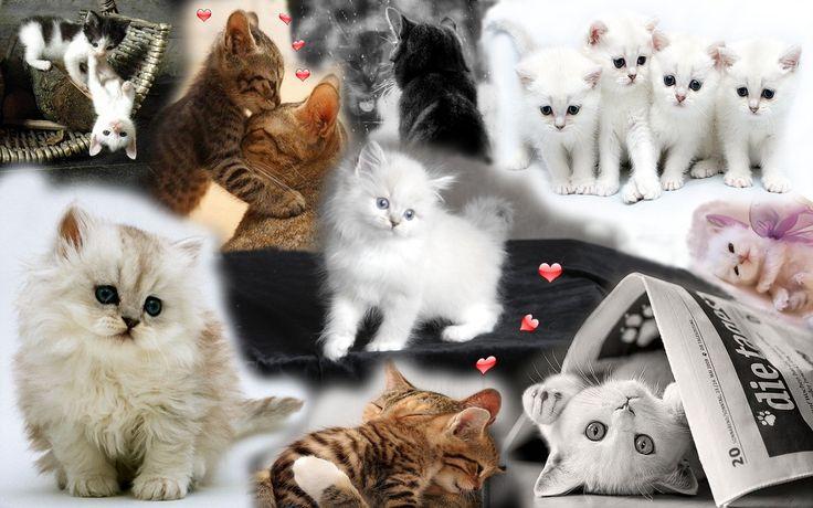 Kittens...Kittens....Kittens