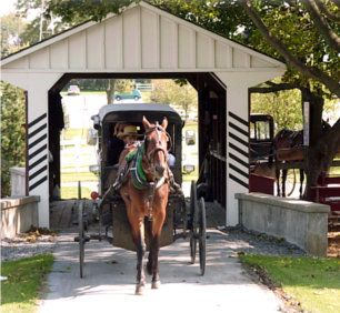"The ""Amish Farm Tour"" - Aaron and Jessica's Buggy Rides. Adults $17"