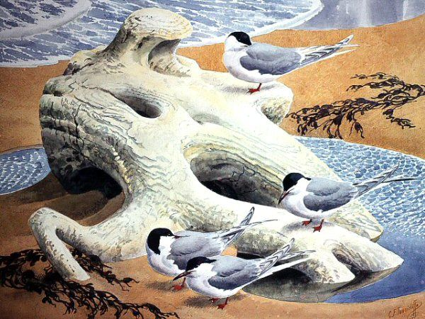 Charles Tunnicliffe - Sea Sculpture