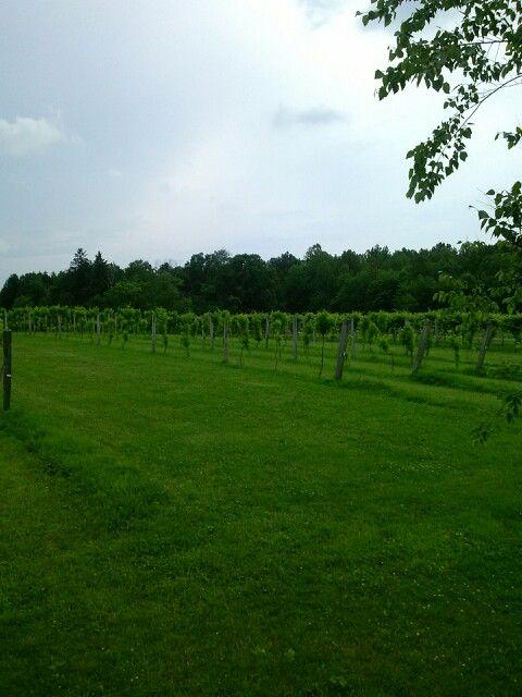 Sarah s vineyard cuyahoga falls ohio home cuyahoga falls and su
