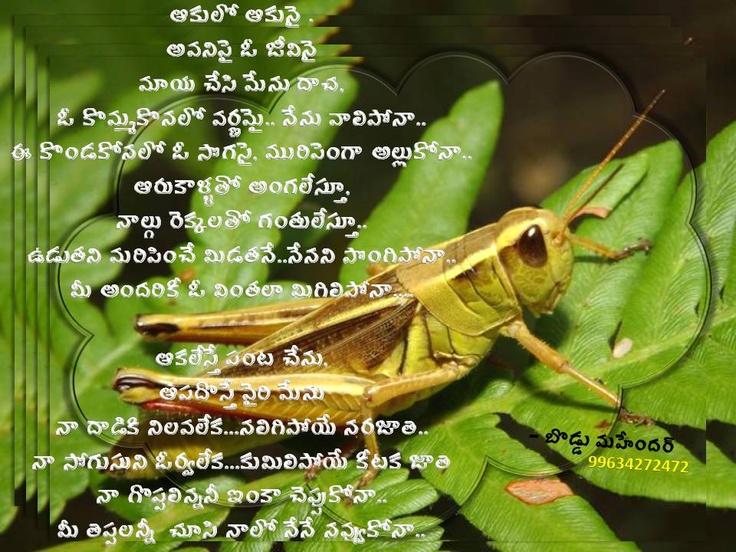 POEM ON GRASSHOPPER BY BODDU MAHENDER | My own poetry | Pinterest