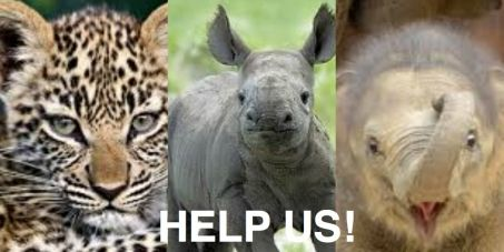 HELP STOP THE SOURCE OF WILDLIFE SLAUGHTER-DEMAND! Tell The European Commission: Ban the import of animal trophies into EU Member States. PLZ SIGN SHARE!https://secure.avaaz.org/en/petition/The_European_Commission_1/?aTKQVgbmobile=1