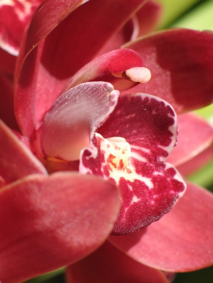 Orchid image by watercolorjen - Photobucket