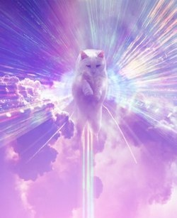 Cat in the sky via http   sleepystoryteller tumblr com   catsUnicorns With Lasers