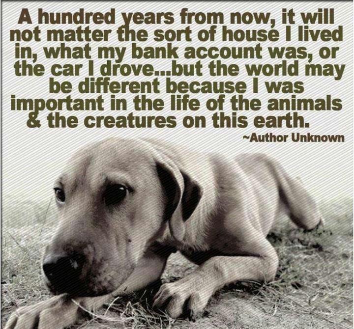Rescue Me Dog Quotes Quotesgram