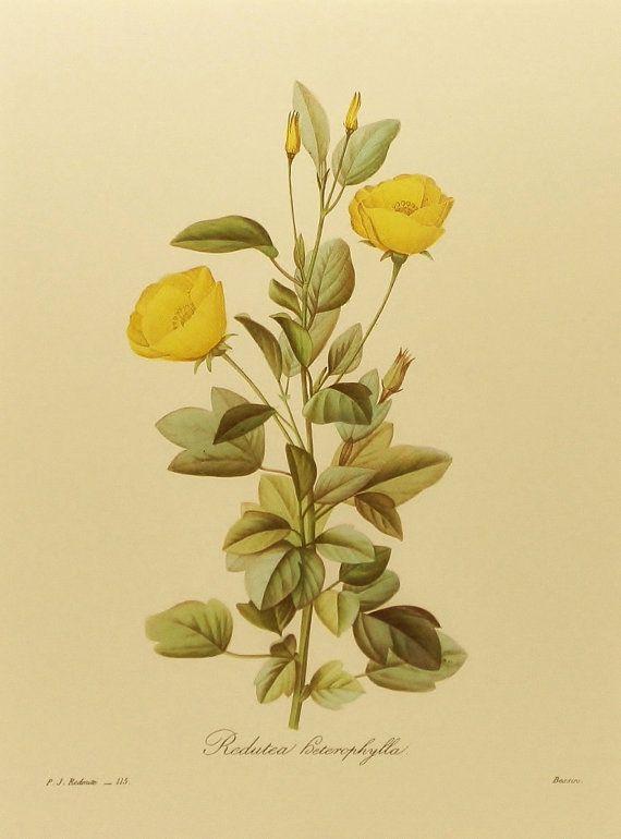 Yellow Flowers Wall Decor : Yellow mallow flower print botanical wall art cottage