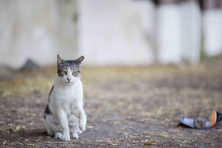 Muscat stray | Paw Prints in Oman- the animal stars | Pinterest
