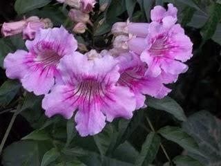 Consejos varios de jardineria para tu casa - Jardineria en casa ...